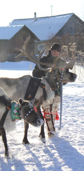 A driver tends to his reindeer at the 2014 Arctic Olympics in Lovozero, Russia.
