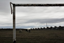 Grazing horses viewed through a decaying goalframe at Stanley Utd's Hilltop Ground in 2019.